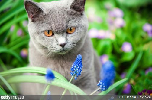 Chat et chien quelles sont les plantes toxiques dans le - Plantes toxiques non toxiques chien chat ...