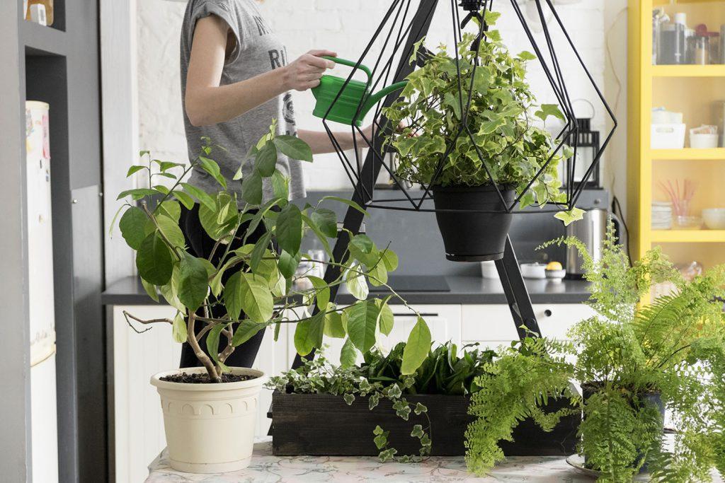 Jeune femme en train d'arroser ses plantes d'intérieur