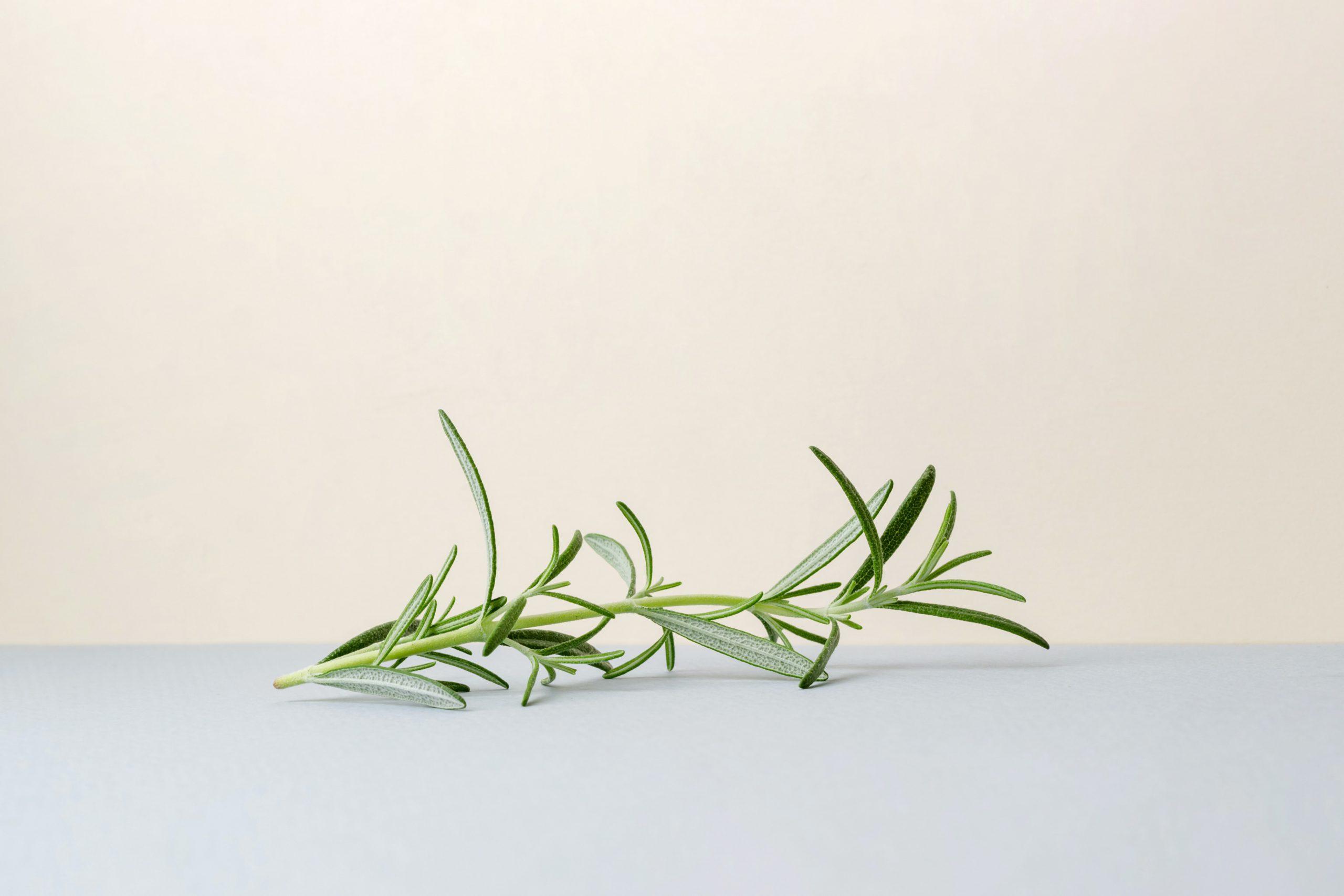 Quelles plantes pour nettoyer le corps ?